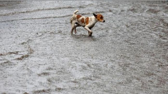 Here's how a dog saved this Kerala family from landslide