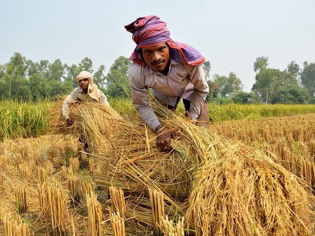 UP government to enlist 11 million ranchers under PM Kisan conspire